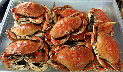 Dungeness Crabs (photo from Santa Cruz Sentinel)